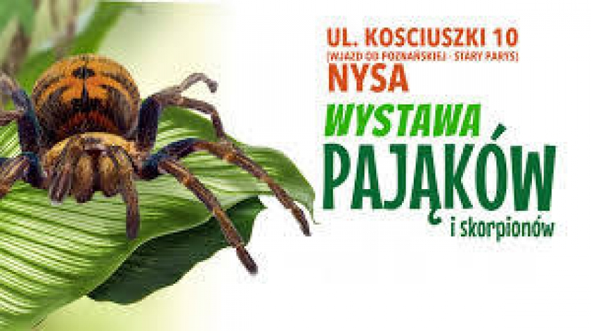 W Nysie można oglądać pająki i skorpiony