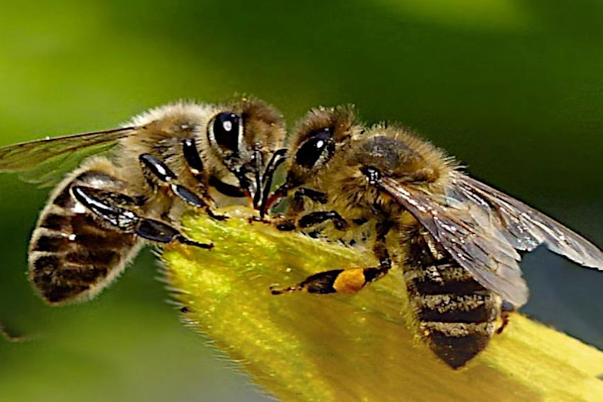 Dbajmy o pszczoły! W Głuchołazach nauczą nas jak to robić.